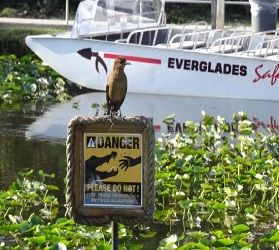 Everglades Day Safari